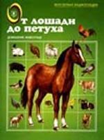 От лошади до петуха. Домашние животные