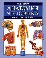 Анатомия человека. Как работает ваше тело