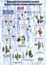 Наглядный определитель деревьев средней полосы России в осенне-зимний сезон