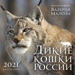 Дикие кошки России. Фотографии Валерия Малеева. Календарь настенный на 2021 год (300х300 мм)