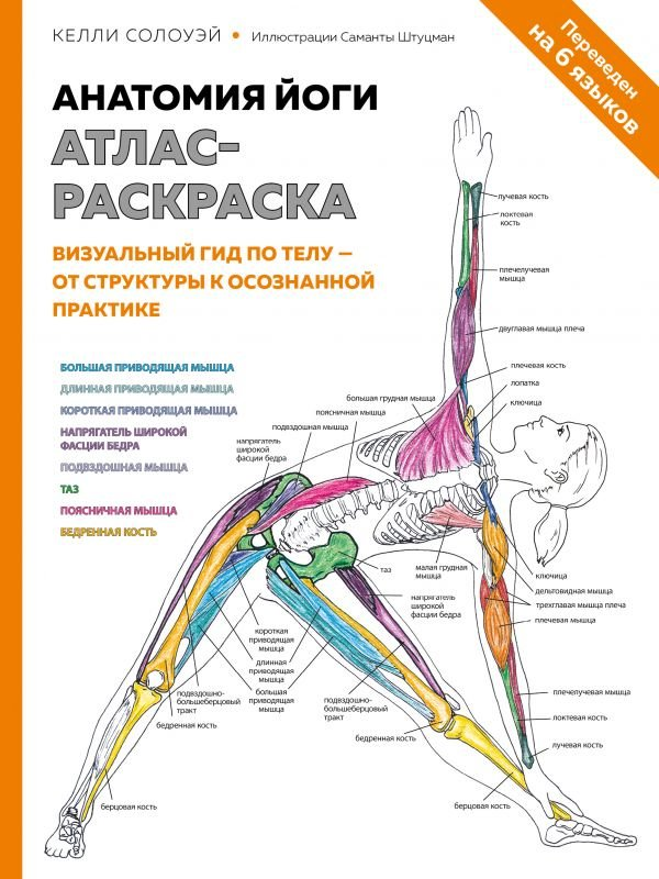 Анатомия йоги. Атлас-раскраска. Визуальный гид по телу — от структуры к осознанной практике
