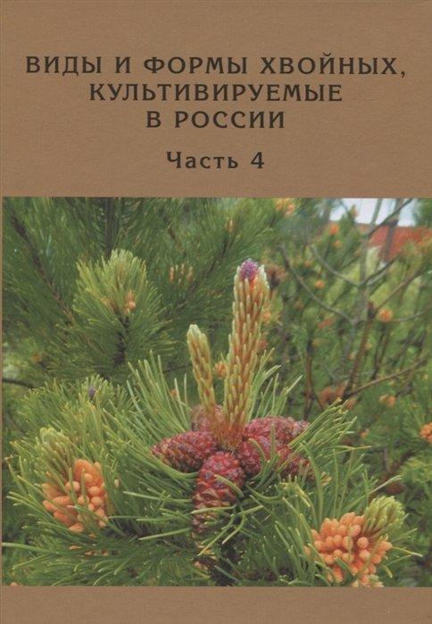 Виды и формы хвойных, культивируемые в России. Часть четвертая