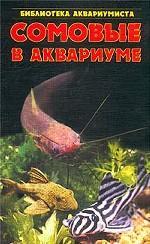 Сомовые в аквариуме