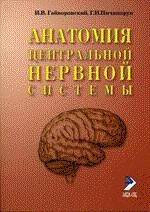 Функциональная анатомия нервной системы