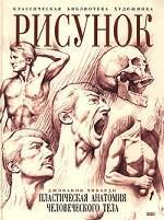 Рисунок. Пластическая анатомия человеческого тела