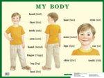 Строение тела человека (My Body). Наглядное пособие по английскому языку для начальной школы