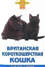 Британская короткошерстная кошка (цвет)
