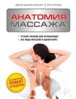 Анатомия массажа