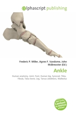 Ankle