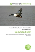 Common Eider