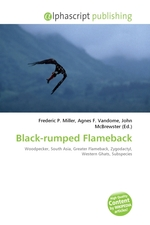 Black-rumped Flameback